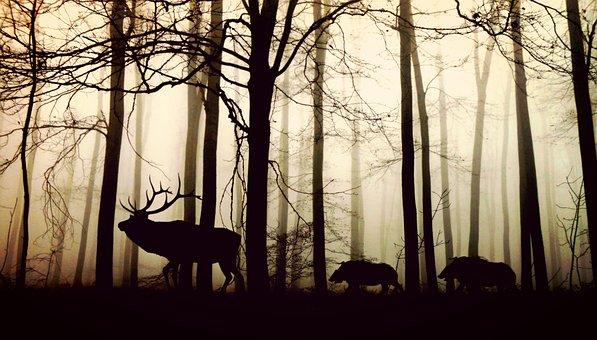 Jagdrechtsschutz Versicherung Jagdversicherung